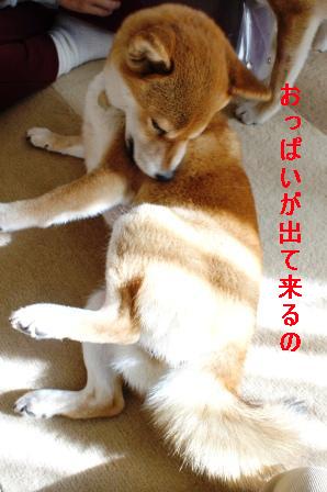 0007_20100206095926.jpg