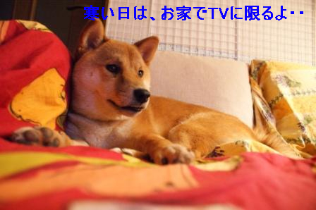 0007_20100214101407.jpg