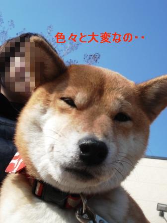 0016_20100201080857.jpg