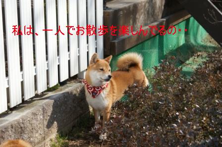 123_20100203085653.jpg