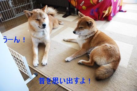 16_20100206100717.jpg