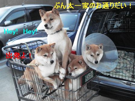1_20100119083736.jpg