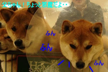 2010_01180022.jpg
