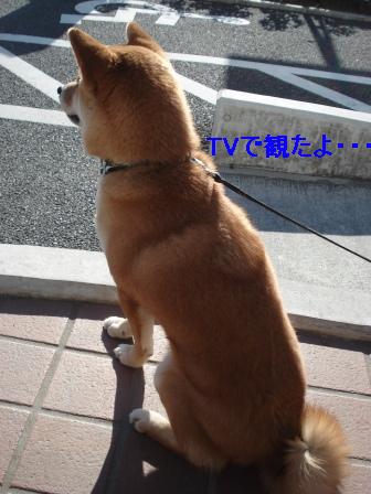 2010_0124(006).jpg