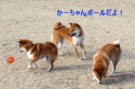 2010_0206(037).jpg