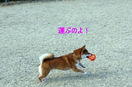 2010_0206(038).jpg