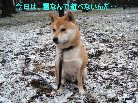 2010_0213(014).jpg
