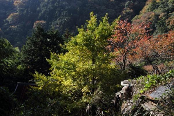 松瀬川・水越地区篠森神社 131116 10