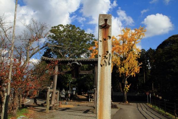 築島神社銀杏紅葉 131122 02