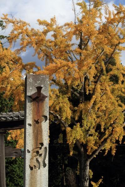 築島神社銀杏紅葉 131122 03