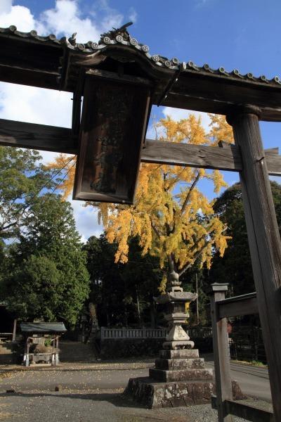 築島神社銀杏紅葉 131122 01
