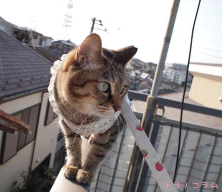 屋上から撮れるかニャ