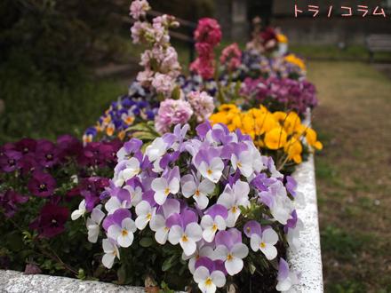 こっちのお花もキレイだニャ