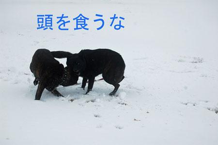yuki2_20100219103215.jpg