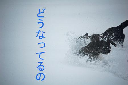 yuki7_20100219103309.jpg