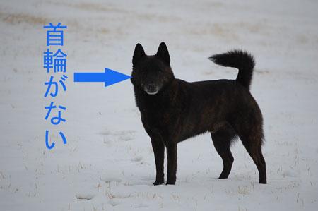 yuki8_20100219103308.jpg