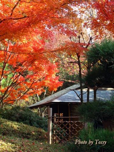 北山山荘茶室