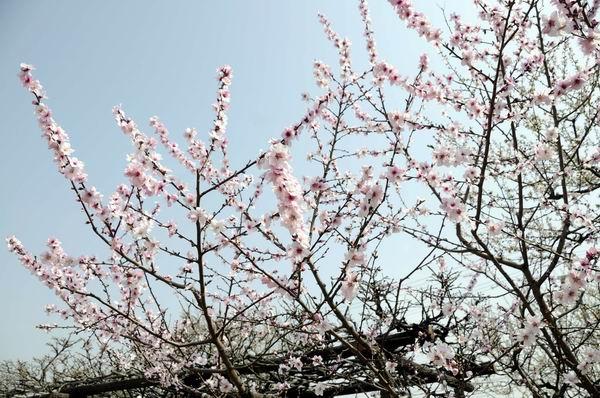 10年03月20日_神戸・アーモンドフェスタ_08