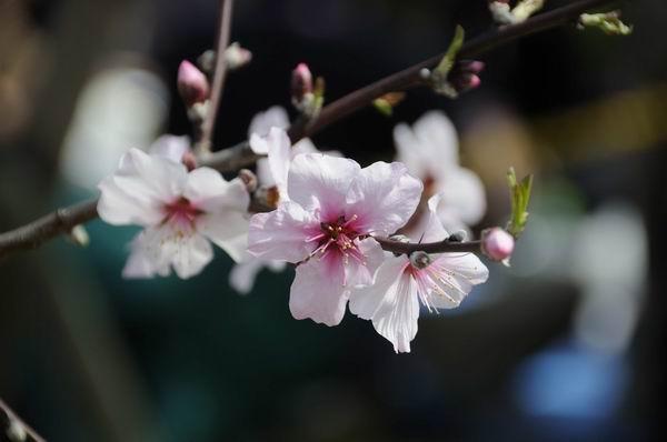 10年03月20日_神戸・アーモンドフェスタ_10