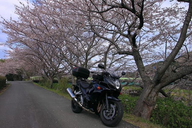 2012年4月8日'12伊豆半島_017s
