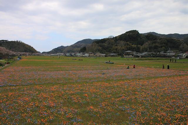 2012年4月8日'12伊豆半島_025s