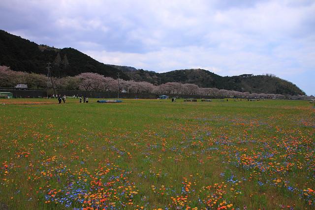 2012年4月8日'12伊豆半島_029s