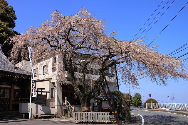 2012年4月8日'12伊豆半島_043s