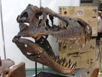 キャラホビ2010化石3