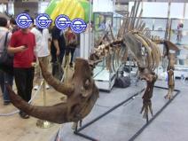 キャラホビ2010化石1
