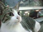 猫画像 水瀬さん