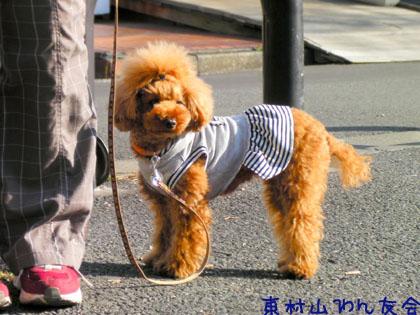 11.03.13.DogWalk053のコピー