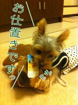 くれシン5