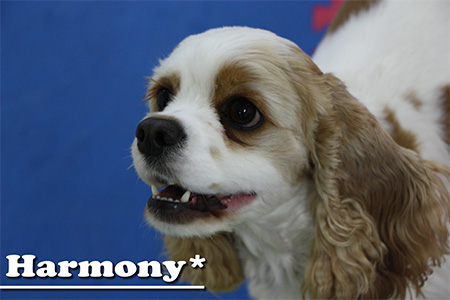 Harmony_20110608155434.jpg