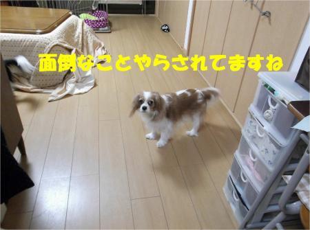 01_convert_20130213174413.jpg