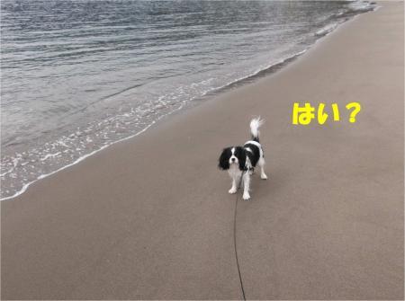 02_convert_20130218180833.jpg