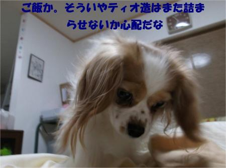 03_convert_20130205184624.jpg