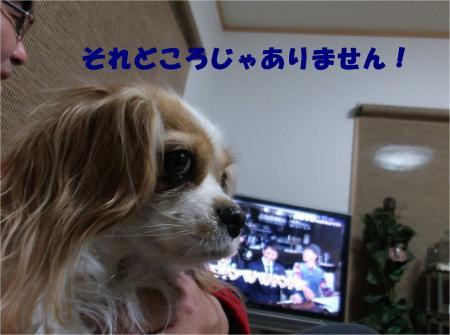 03_convert_20130208182458.jpg