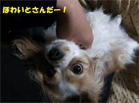03_convert_20130214180029.jpg