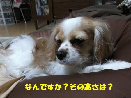 03_convert_20130222171107.jpg