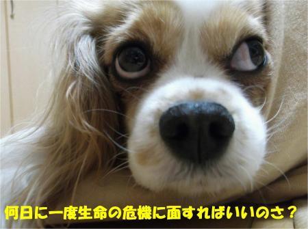 03_convert_20130305175847.jpg
