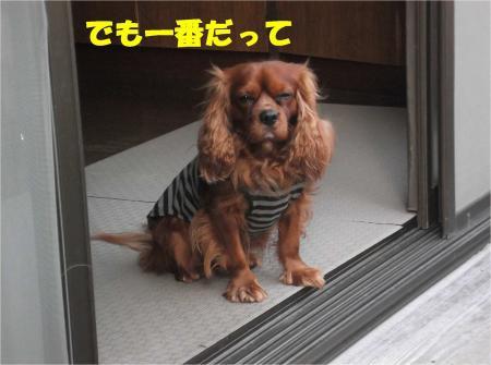 03_convert_20130307173507.jpg