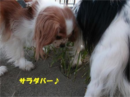 04_convert_20130204172358.jpg