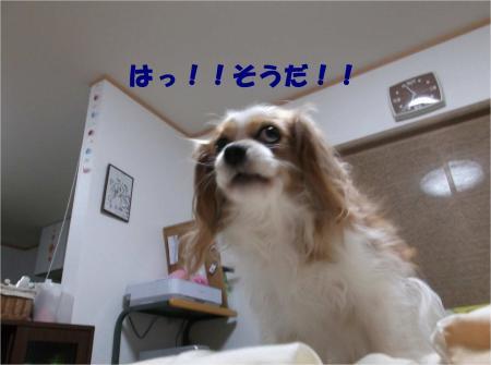 04_convert_20130205184639.jpg