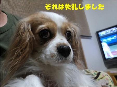 04_convert_20130313163954.jpg