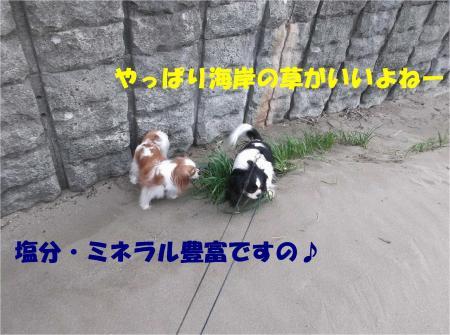 04_convert_20130321180251.jpg