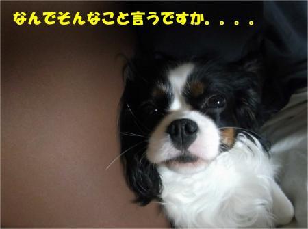 04_convert_20130322180431.jpg