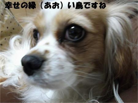 05_convert_20130301173954.jpg