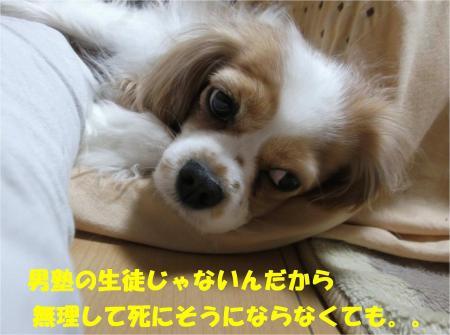 05_convert_20130305175910.jpg