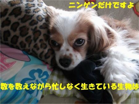 05_convert_20130318174222.jpg