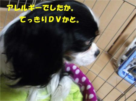 06_convert_20130227172511.jpg